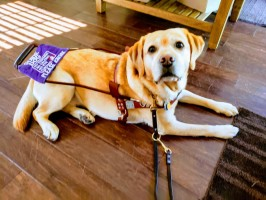 Freedom Guide Dogs for the Blind wins grant award from Bailey and Friends Foundation.