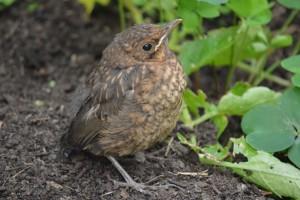 bird-posing-in-garden